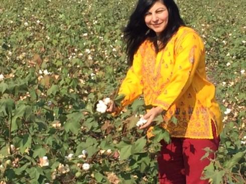 Cotton Pods Navalgund