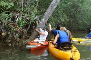 Mangroove Kayak Tour 5