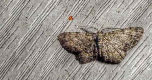 How Do You Know You Have a Moth Problem? – Apartment ABC