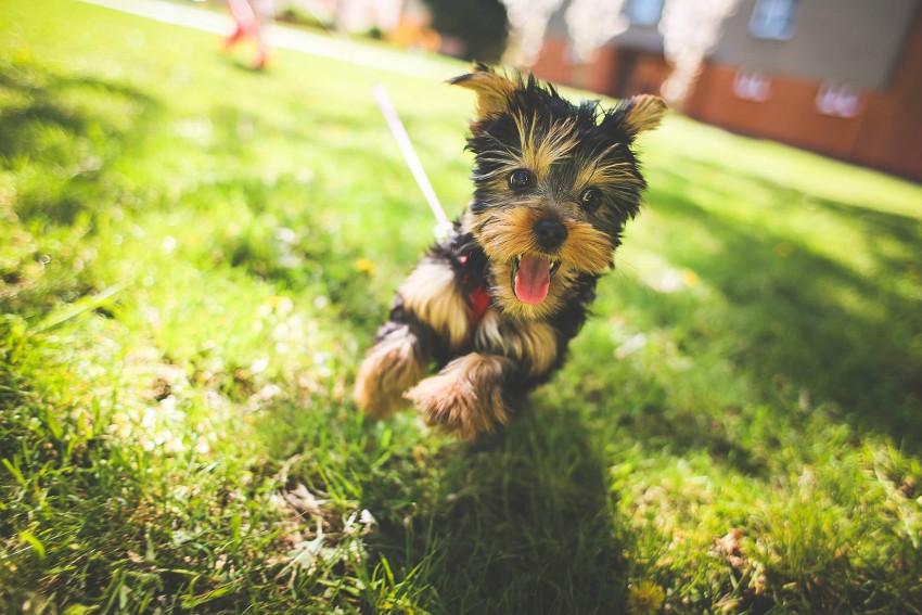Dog Parks in Morgantown, WV