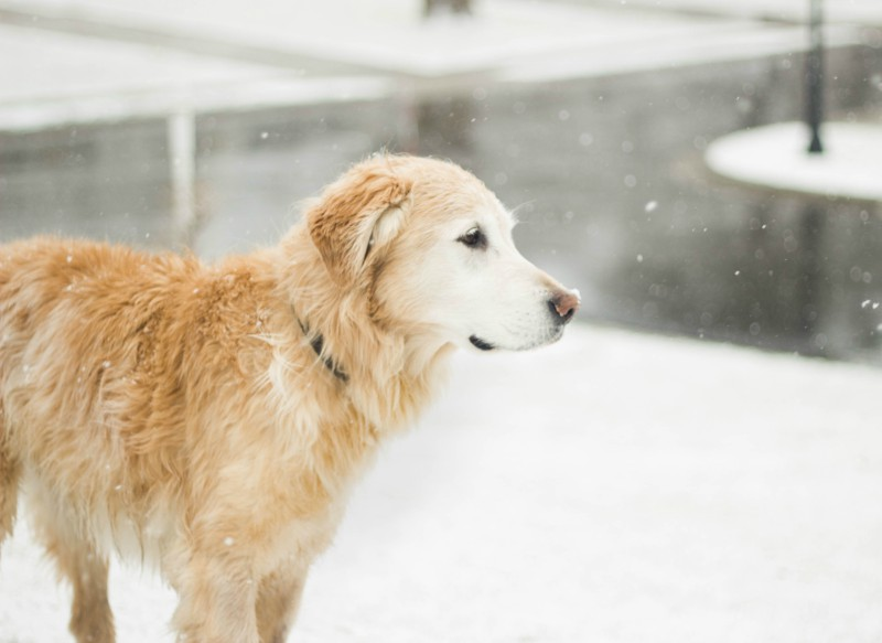 7 Winter Dog Care Tips Every Pet Parent Should Know