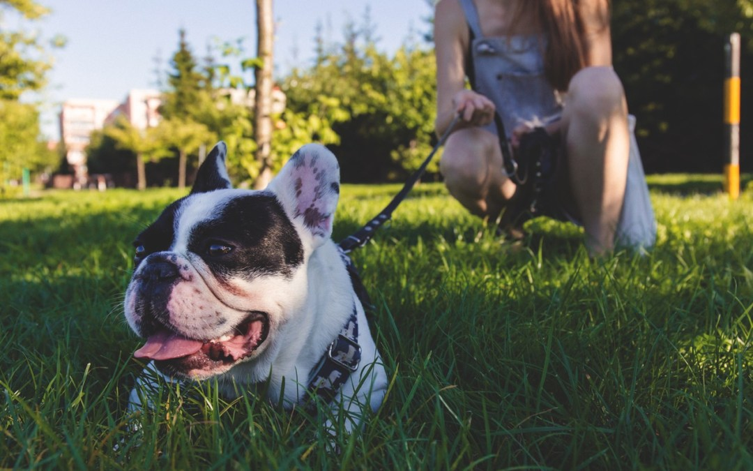 Top Dog Parks In St. Louis