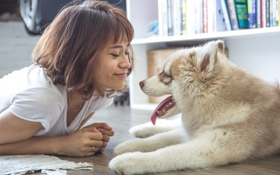 3 Apartment Decorating Ideas For Pet Owners