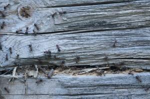 bugs, apartment
