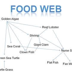 Ocean Food Chain Diagram Monaco Rv Issues Coral Reef Web Man With