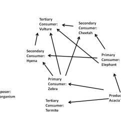 African Elephant Food Chain Diagram 230v Relay Wiring Lion Agcrewall