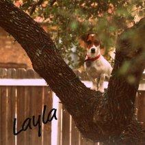 My beloved Layla I miss her so much!