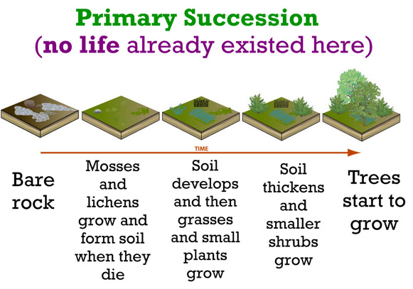 Secondary succession  stable crops in deciduous forests community disturbance such as wild fire destroys the forest also primary and temperate rh apbiologykornytoto weebly