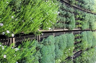 edible-garden-herb-wall