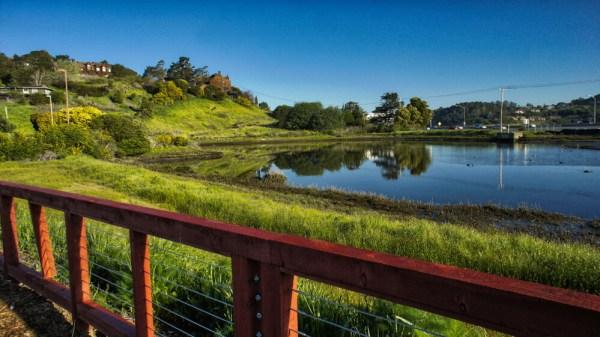 sized_marin-gateway_wetland