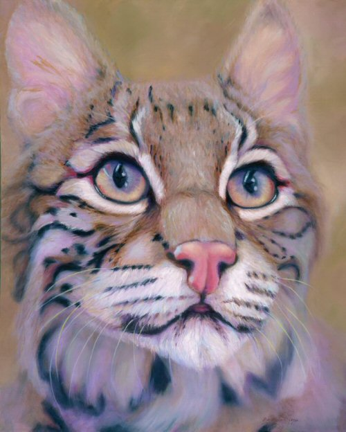 """Inquisitive Bobcat"" by Beth Hyatt-Rapp (painting), Peak at the Peak Cover, November, 2010"