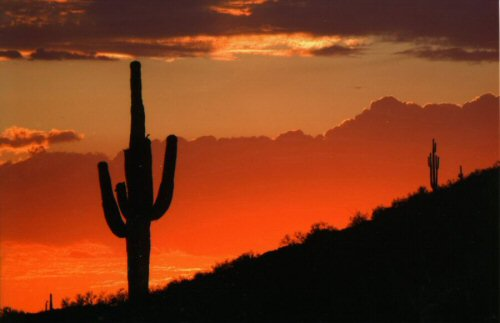"""Saguaro Sunset"" by Tom Morris"