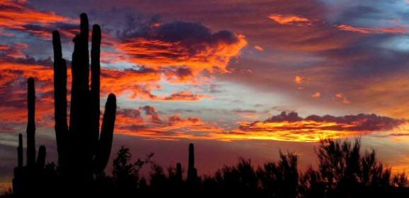 Scottsdale Desert Discovery Center Moves Forward