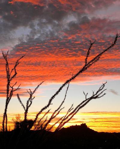 "'Ocotillo Reaching for Sunrise at Pinnacle Peak Park"" by Kathy Mascaro"