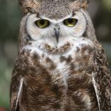 Write Stuff: The Wise Old Owl