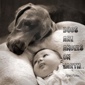 Dogs are angels on earth