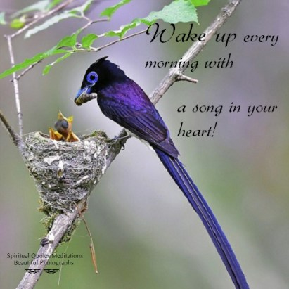 Wake up every morning with a song in your heart!