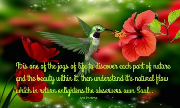 It is one of the joys of life to discover each part of nature and the beauty within it, then understand it's natural flow which in return enlightens the observers own Soul.. ~April Peerless