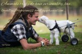 Animals truly do have personality, love, loyalty, forgiveness and appreciation towards not only their own kind but the human species as well.. ~April Peerless