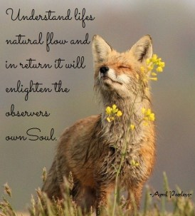 It is one of the joys in life to discover each part of nature and the beauty within it. Understand life's natural flow and in return it will enlighten the observers Soul.. April Peerless
