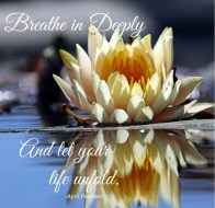 Breathe in deeply And let your life unfold. April Peerless