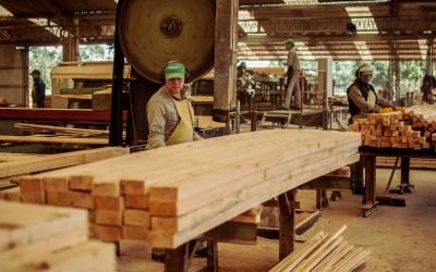 Madera aserrada húmeda es la principal producción de las forestoindustrias de Corrientes