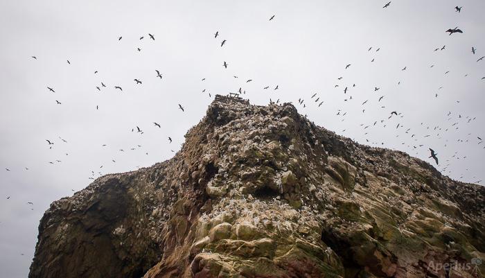 several birds on a rock island