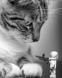 Kryton vs Storm Trooper