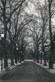 View down a park path