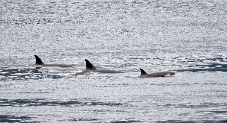 Brown's (Orcas)