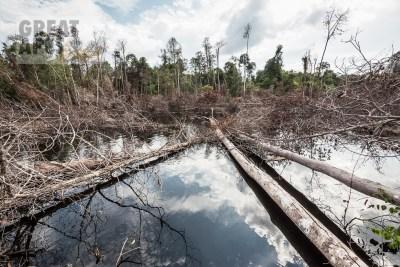 fire deforestation Borneo