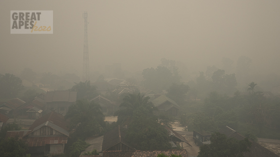 Borneo Kalimantan fires