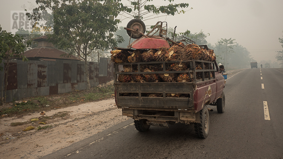 palm fruit Borneo Kalimantan fires