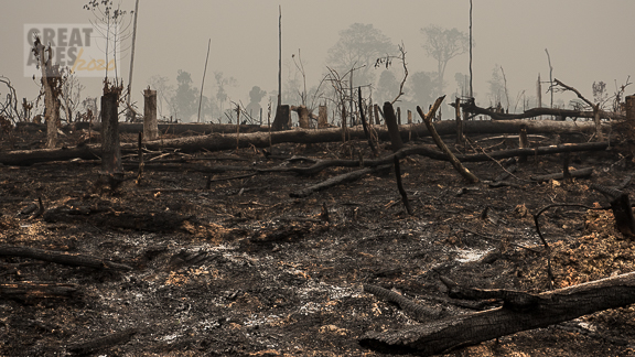climate change fire haze, slash-and-burn rainforest