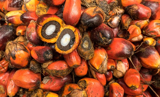 palm oil fruit Cameroon