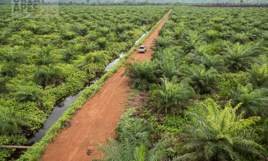 palm oil plantation
