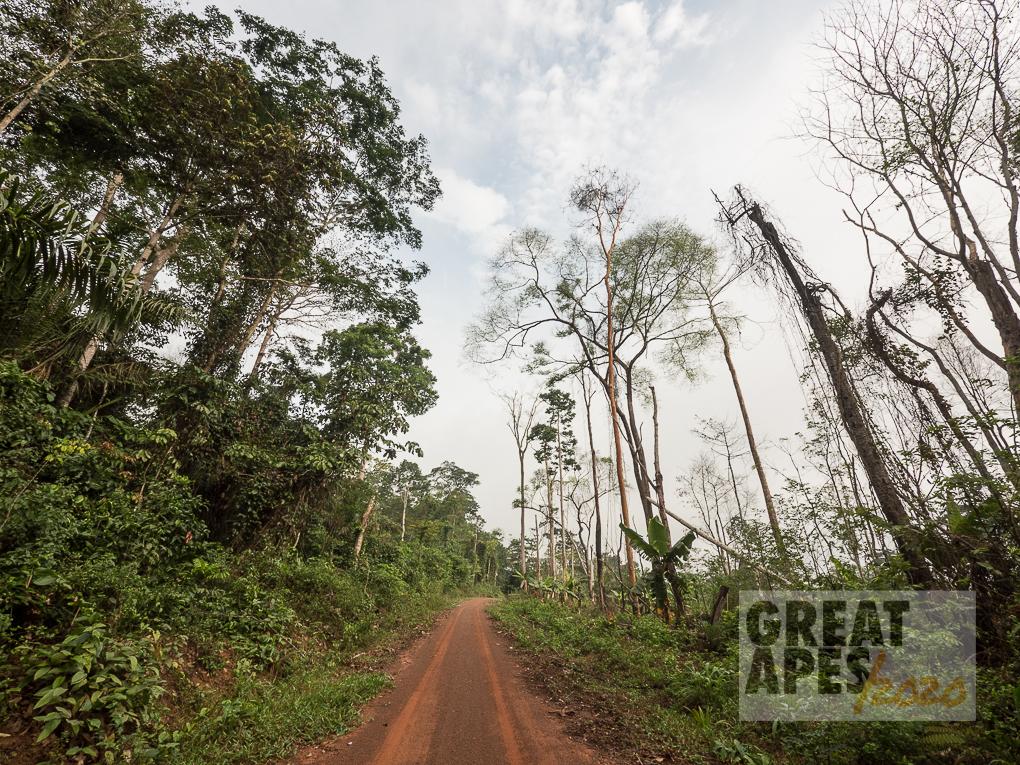 slash and burn palm oil deforestation