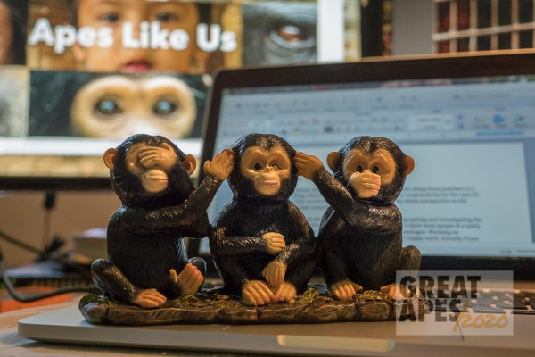 Hear no, See no, Say no, evil chimpanzees - year in review