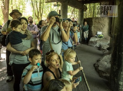 zoo goers great apes