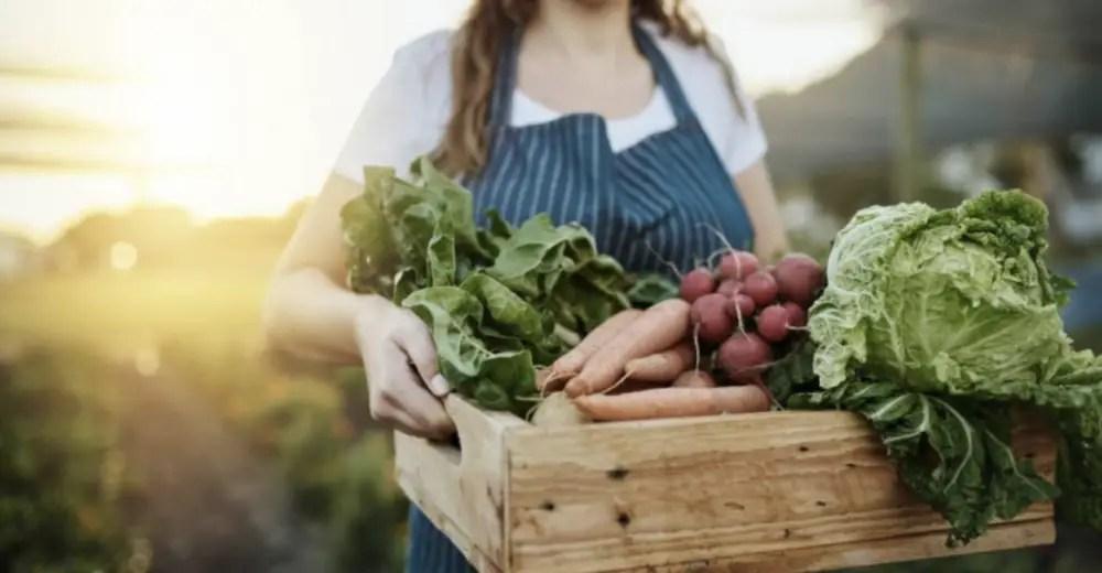 Herramientas gratuitas para cumplir con criterios de sostenibilidad