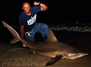 Jaymes Sandbar Shark 1