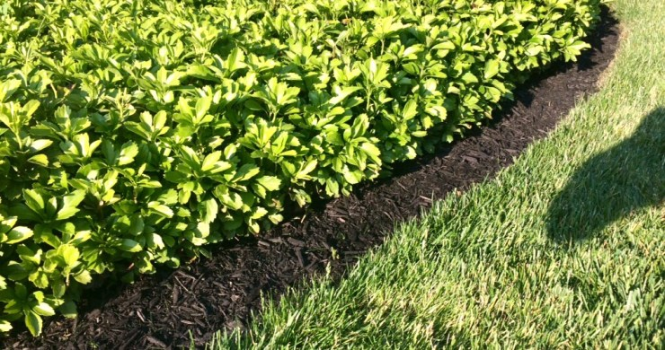 mulch, groundcover and bed edging