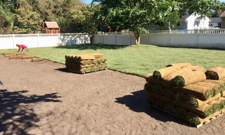 installation of kentucky bluegrass sod