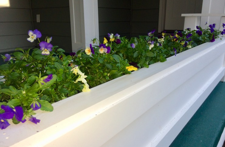 Long planting container filled with colorful pansies