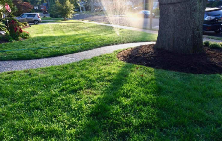 Results from broadcast lawn seeding