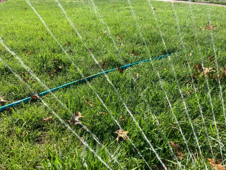 Hose and sprinkler watering lawn