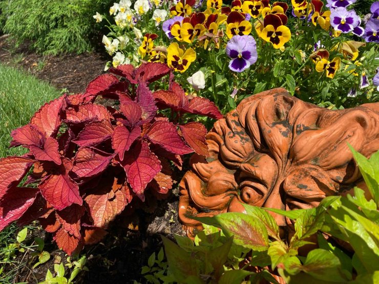 Seasonal Color Flowering Summer Annuals