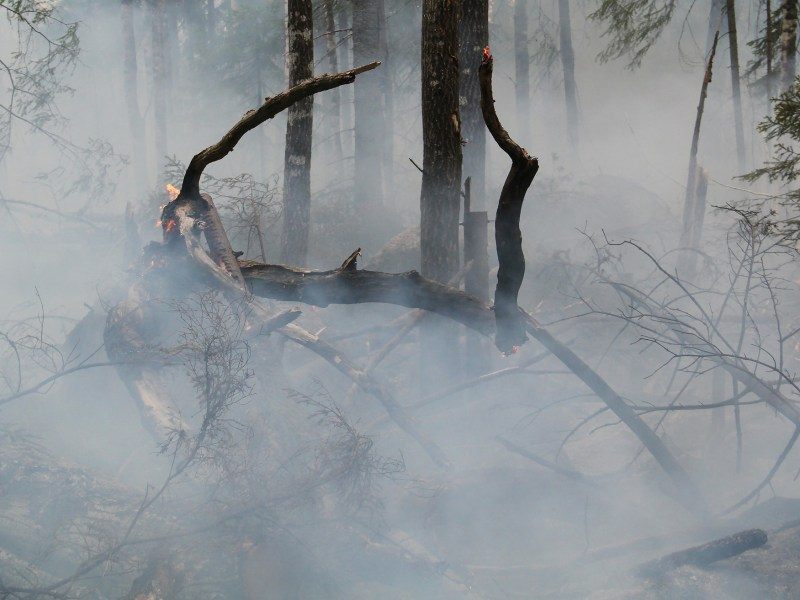 Indonesian forest fires last year cost the country at least $16 billion in economic losses
