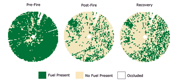 Figure 1 – Horizontal connectivity of surface and near-surface fuels.