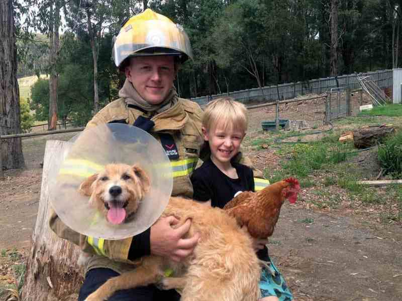 Firefighters don't have time to look after pets while fighting fires, this will not happen.